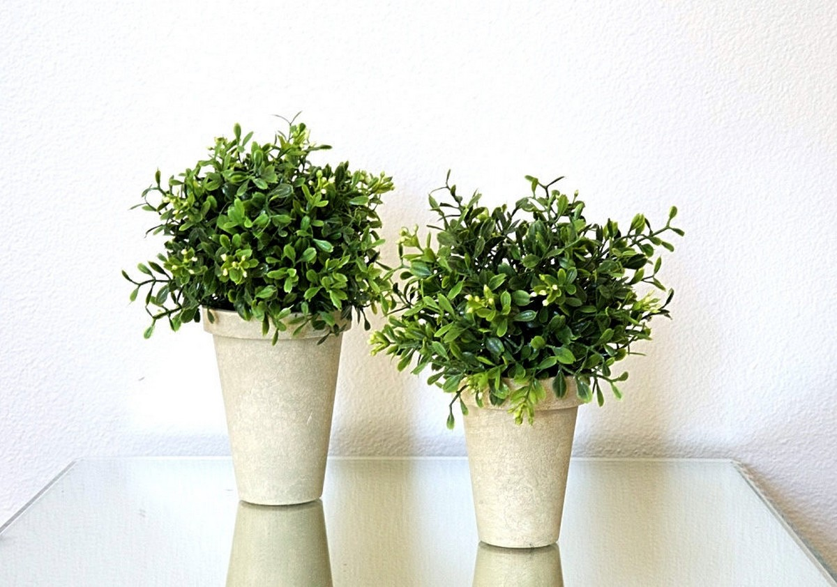Decorating your home with plants is a great idea if you want your interior to feel natural, fresh and outdoorsy.